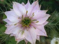 Flower 1-1