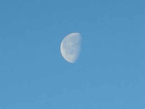 this Mornings Moon