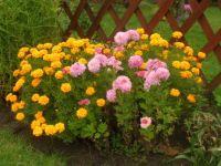 podzimní kytky