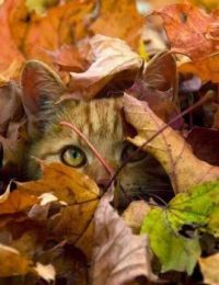 cat in leaves