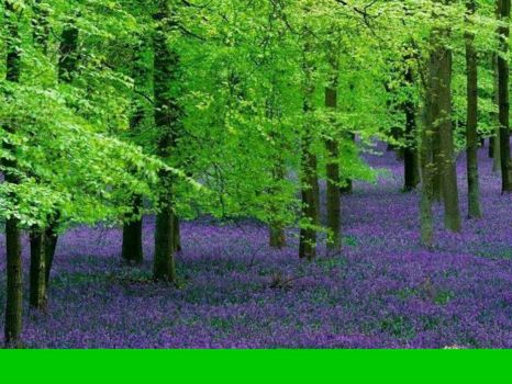 Woods perfumed with lavender