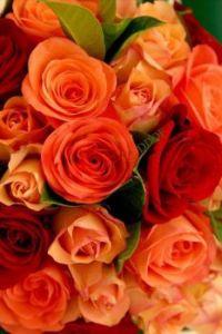 růže-.