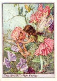 Sweet Pea by cicely mary barker