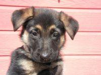 Just a cute puppy