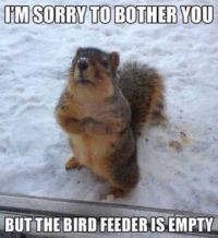 I'm sorry to bother you.....