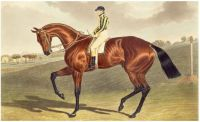 Bay Middleton Winner of the Derby in 1836 Painting by John Frederick Herring Snr