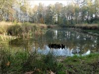 Pond in the woods, The Woold, Winterswijk, Holland