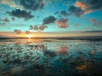 Wadden Sea, Netherlands, Germany, Denmark - 43