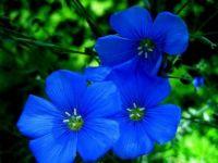 1  ~  'Beautiful Blue'