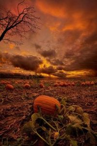 """Waiting for the Great Pumpkin"" by Phil Koch"