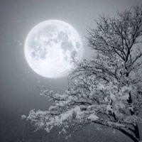 Luna a zima