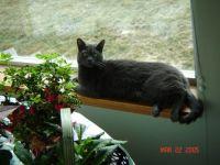 RC (Rita's Cat)