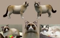 Will the real Grumpy Cat please smile!