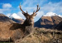 Highland Wildlife