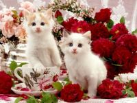 Two Kittens, a Teacup, and Flowers