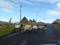 traffic in Ireland