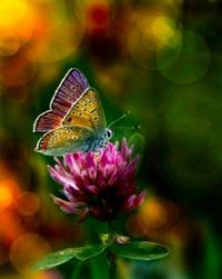 Wild for Wildlife and Nature - Butterfly - Medium