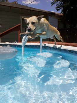 Roxy and Her Olympic Dive