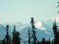 Alaskan conifers & mountains