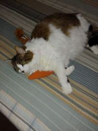 Lucy and the Carrot