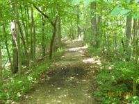 Southern Michigan forest path