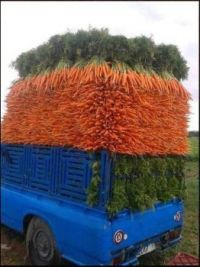 Perfectly Stacked Carrots