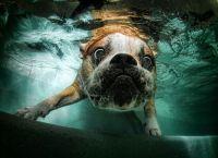Underwater Bulldog