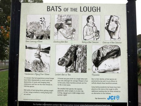 Bats of the Lough