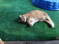 Indoor outdoor kittening