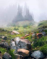 The fog in Mount Rainier NP. Washington  6745