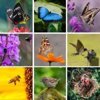 Springy Flying Things - Medium