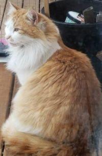 visitor cat