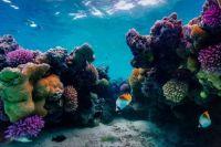 2  ~  'Darkpink-purple Corals & some cute fishes'