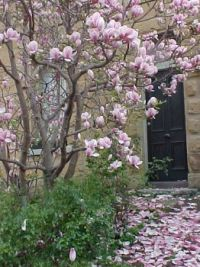 Magnolias in front of sandstone house