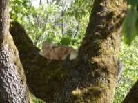 puddy in tree