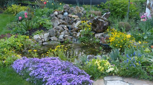 Mein Teich im Frühling
