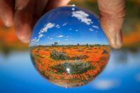 David Emenheiser photo globe