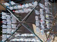 mondmaskers aan de lijn/Protection masks drying in the sun