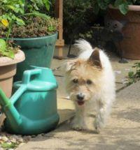 phe pottering in the garden