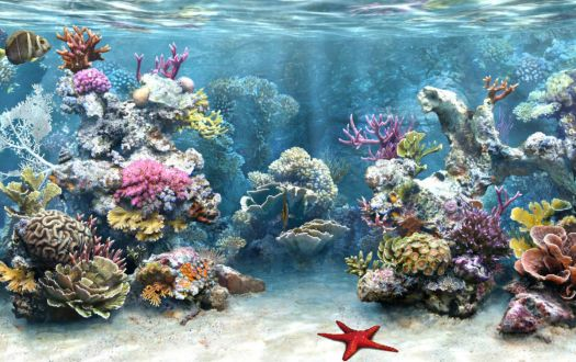 sea-life-aquarium
