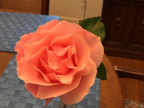 Mailbox rose