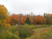 Fall 51