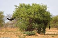 Unidentified animal