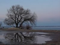 Lone tree on the shore
