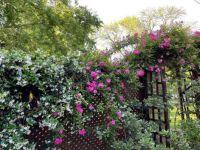 Jasmine & Roses
