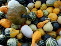 Harvest of gourds