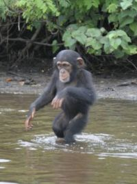 Max fleeing the rain...
