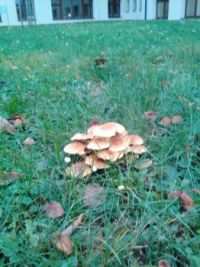 autumn / mushrooms