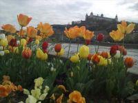 Würzburg castle in Spring