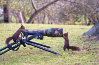 squirrels & camera